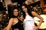 girls-of_sema_auto_show_2008-img_36